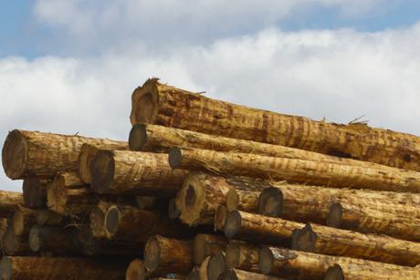 Timber, image 2
